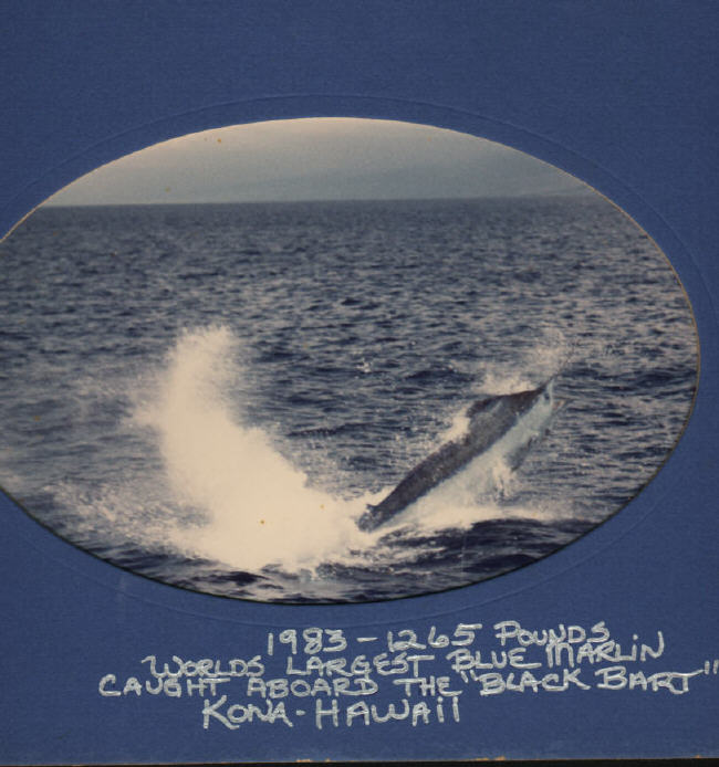 Blue marlin photo - 1265 lbs