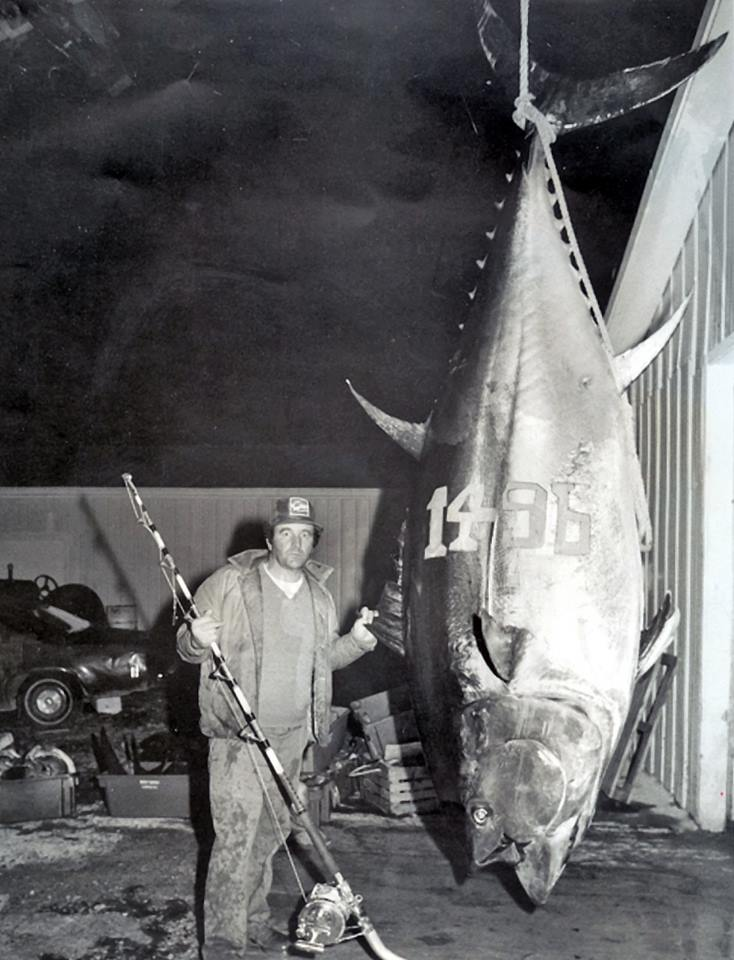 Bluefin Tuna largest bluefin tuna  alltackle igfa world record