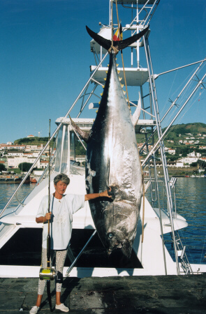 World record bluefin tuna - 974 lbs