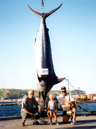 Photo of Atlantic blue marlin - 1001 lbs - caught stand-up - Azores