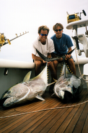 Photo of two bigeye tuna 175 to 200 lbs - Azores
