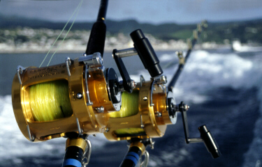 Photo of reels used to catch grander blue marlin