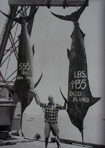 Photo of huge black marlin (1135 and 555 lbs) caught on the same day by Kip Farrington - Cabo Blanco, Peru
