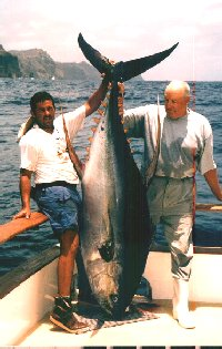 photo of huge yellowfin tuna