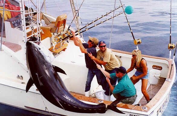 photo of bluefin tuna 900 lbs Tuna Hunter off Rockport MA