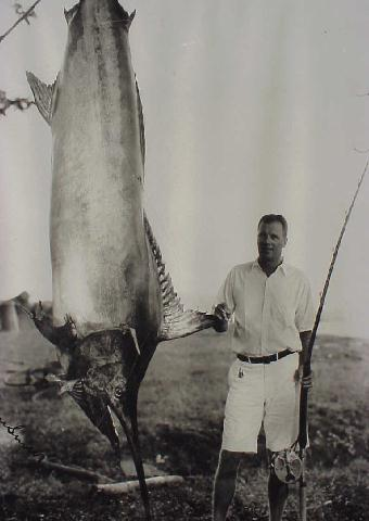 Pacific blue marlin photo