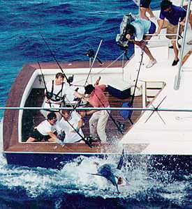 Photo of grander marlin on the leader