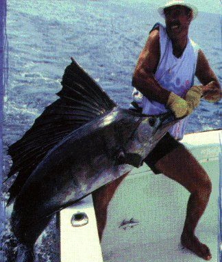 WOW! Pacific sailfish photo