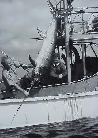 photo of Michael Lerner and swordfish from his 1940 Peru-Chile Expedition