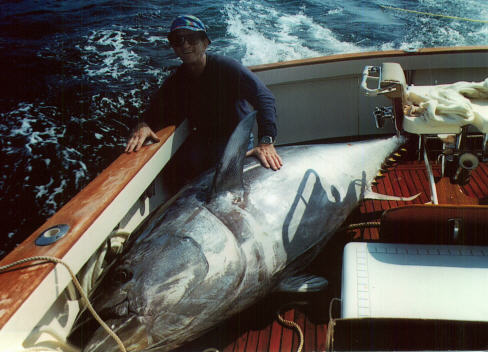 Giant bluefin tuna of the atlantic severity of decline for Giant tuna fish