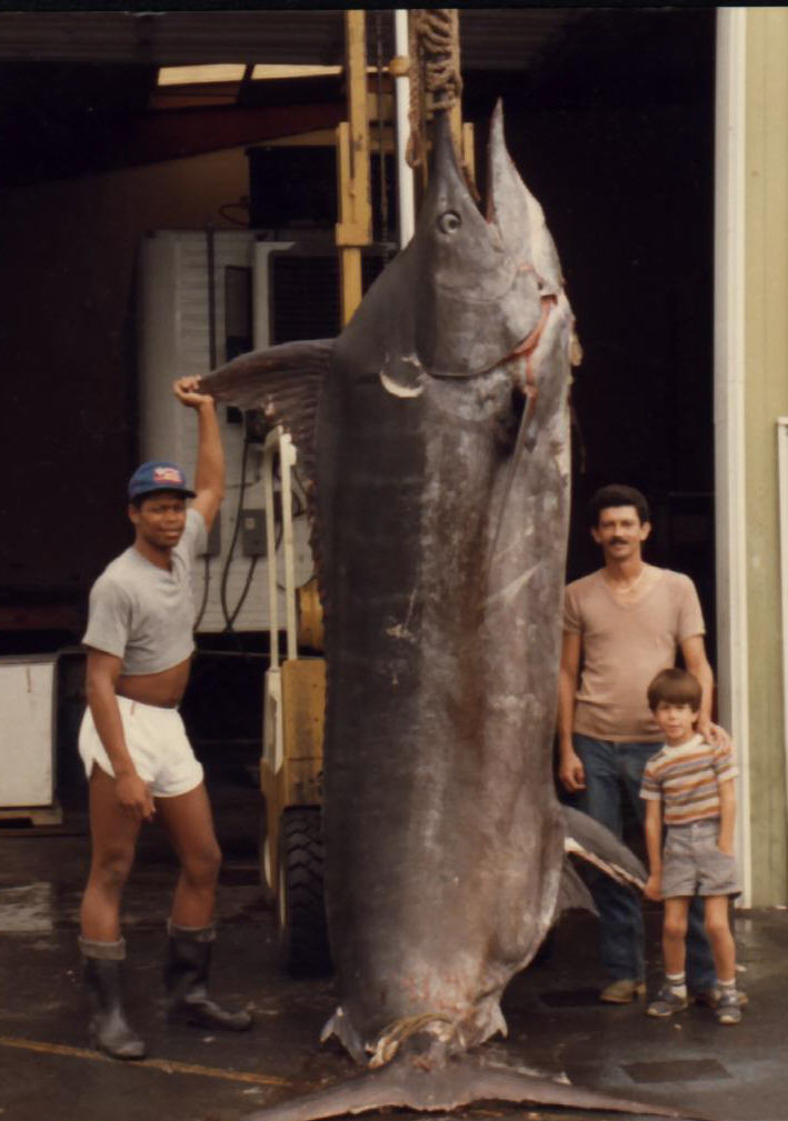 Photos Of Huge Pacific Blue Marlin Some Of The Largest