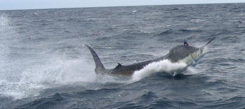 Atlantic hot spots for Ocean fishing oregon