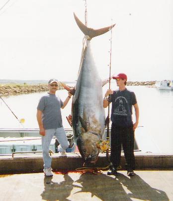 photos of giant bluefin tuna of prine edward island canada